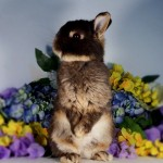 ברונו         זכר          צבע:Chocolate otter
