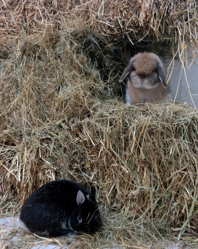 הארנבונים מאחורי הקלעים…