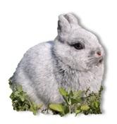 ארנב ננסי תזונה