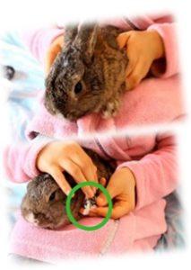 החזרת ארנב ננסי בעת גזיזת ציפורניים