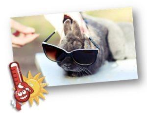 ארנב ננסי סכנות הקיץ